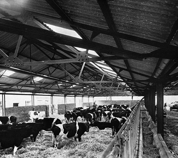 50 Years Ago: Structural steelwork up on the farm